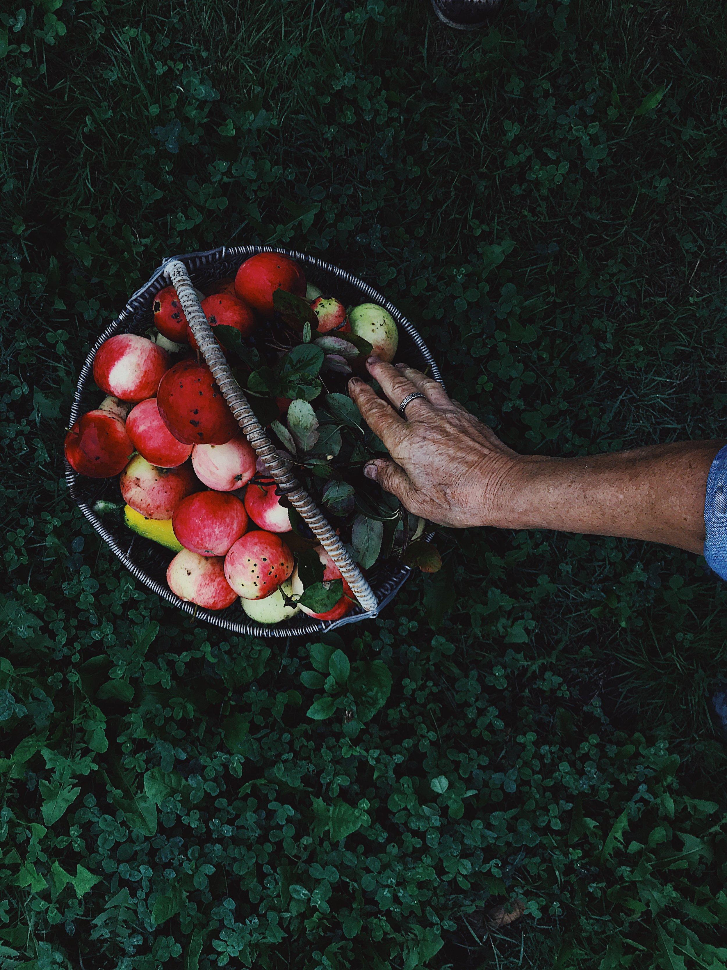 obuoliai.nomnom.lt